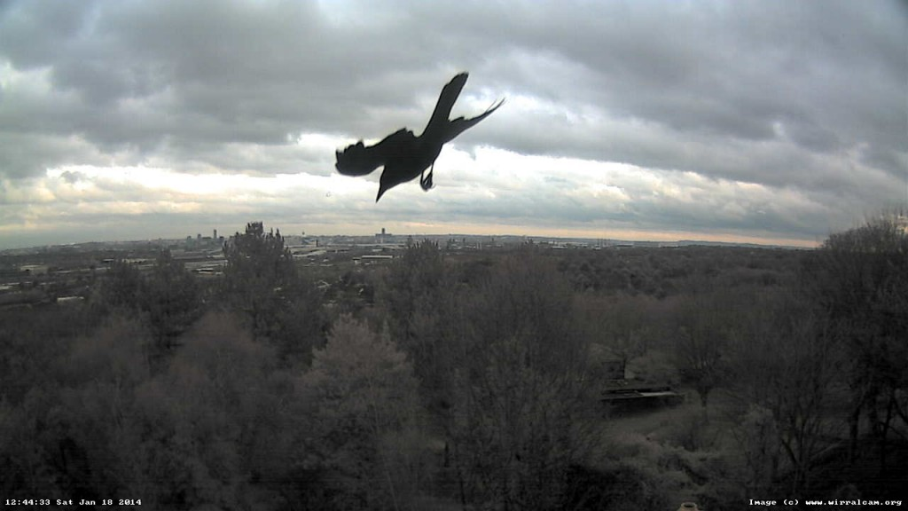 Bird caught on webcam, 18 Jan 2014.
