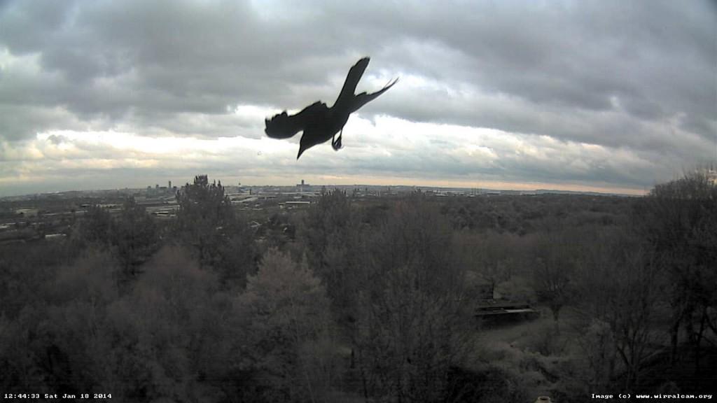 Bird caught on webcam, 18 Jan 2014.