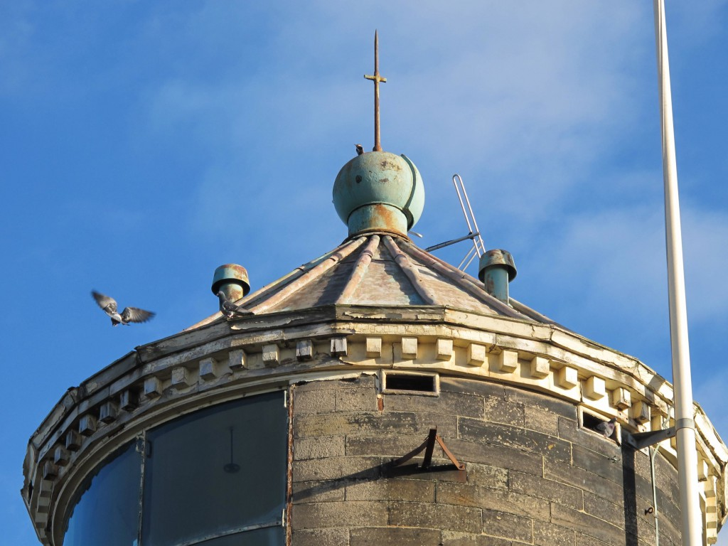 Woodpecker and pigeons on Bidston Lighthouse, Valentine's Day, 2016
